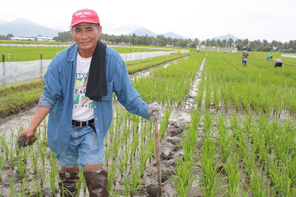 A rice worker outside the International Rice Research Institute. Rice is a staple part of the Philippine diet