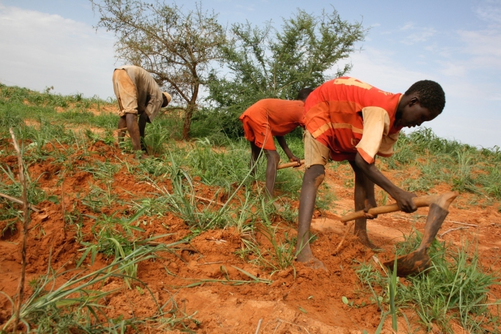 Village chief of Bagga, Idrissa Dayabou, is planting millet with two of his sons