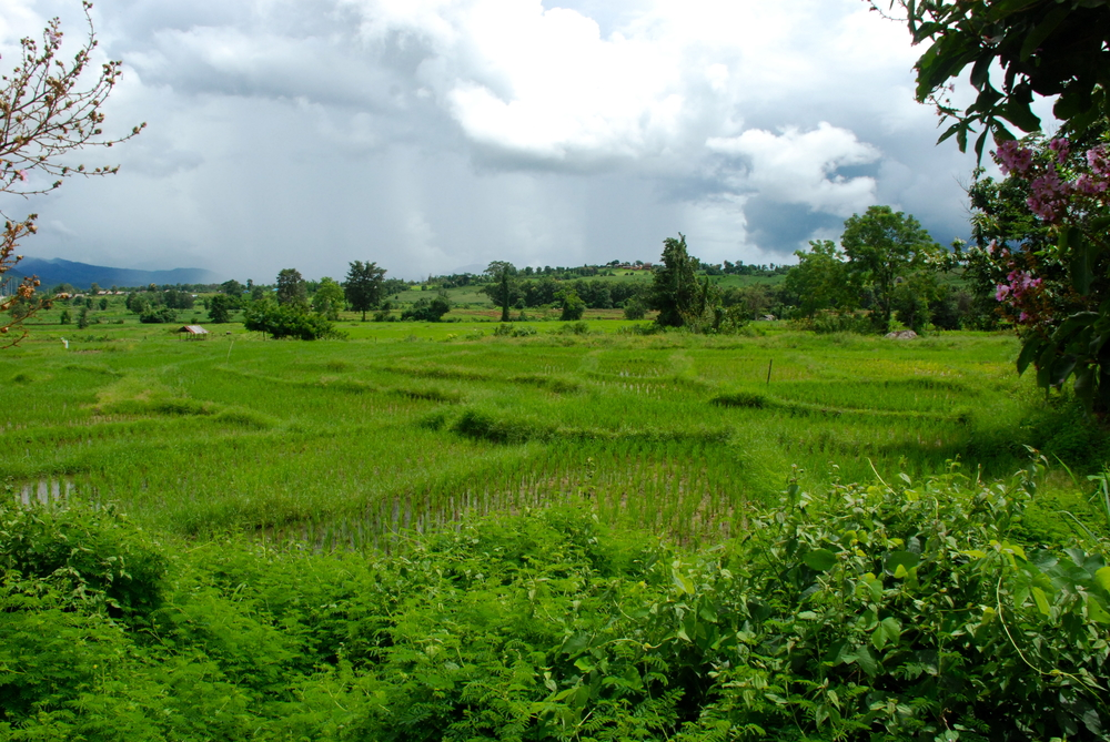 A paddy field in Pai in northern Mae Hong Son Province