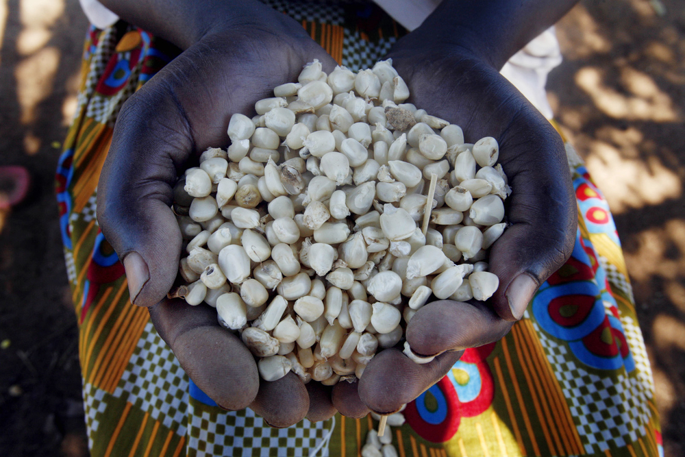 Beatrice Asekenye holds up a handful of newly dried maize in her home in the town of Katakwi, Uganda