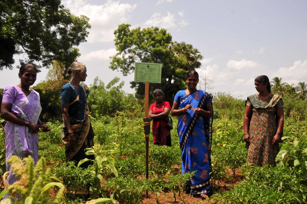 A group of women stand in the  vegetable plot theystarted with sums saved from cash for work programmes in Allankulam