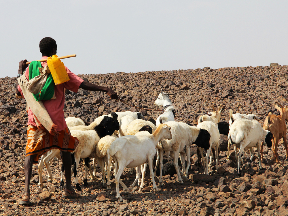 Pastoralist communities in the Horn of Africa are some of the hardest hit by the drought. They rely on livestock for income and food, and the lack of water only increases their existing vulnerability