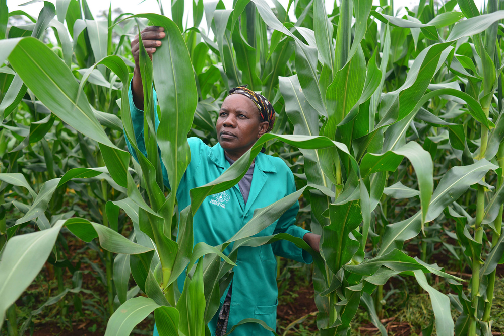 Using conservation agriculture practices, a smallholder farmer from Swaziland's eastern Lubombo District, can grow maize without the need for fertilizer