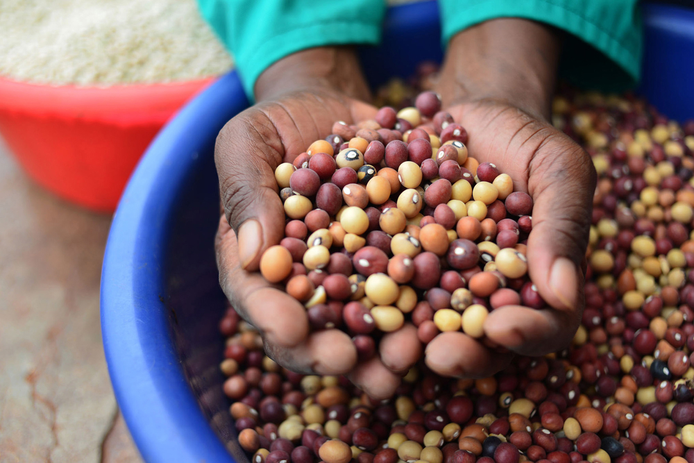 Swaziland's farmers are being encouraged to intercrop maize with legumes such as jugo beans that can be sold or used to improve their families' diet