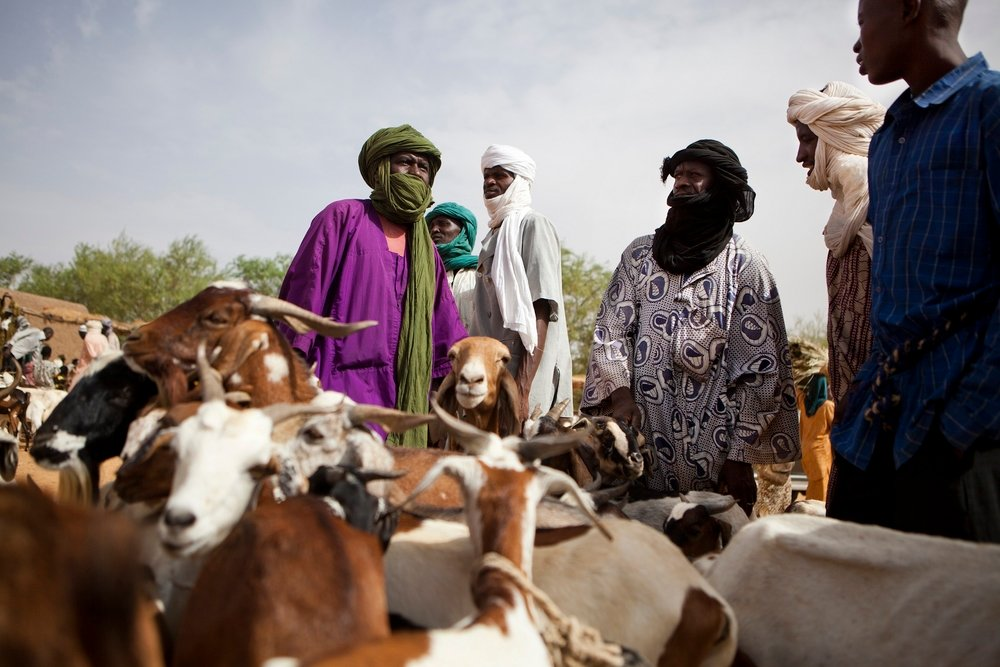 Pastoralists from nearby villages come to market day in Forgho, 25km north of Gao, hoping to sell their animals