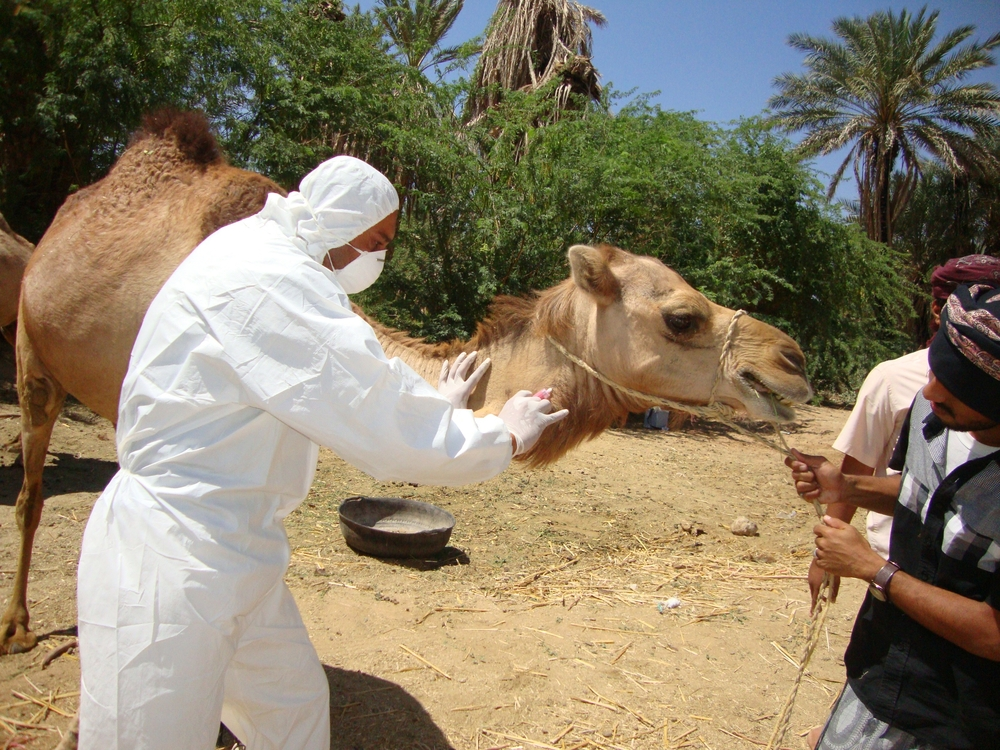 MERS-CoV Investigation | Yemen 
