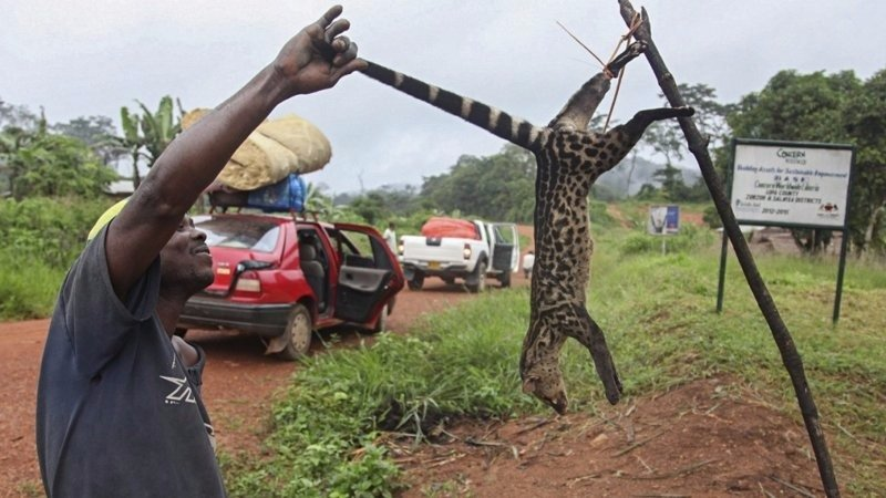 A Liberian man holds out bush meat to sell along Liberia/Sierra Leone border.