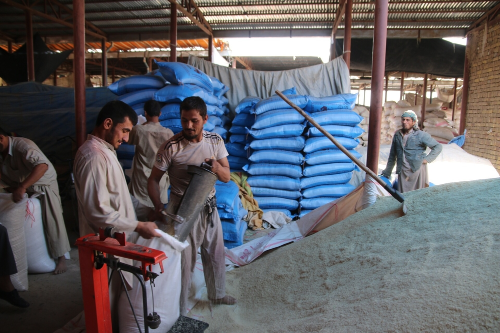 Men fill bags with freshly harvested rice at the rice market in Kunduz city, Afghanistan, in November 2015