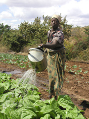 [Malawi] mnhkumbi woman watering.