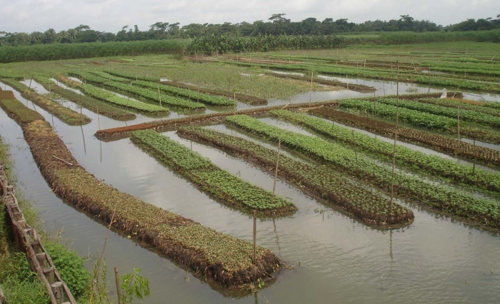 wetland resource in bangladesh Wetlands of bangladesh are experiencing a rapid decline natural resources of these ecosystems have been disappearing over the years resource scarcity resulting from.