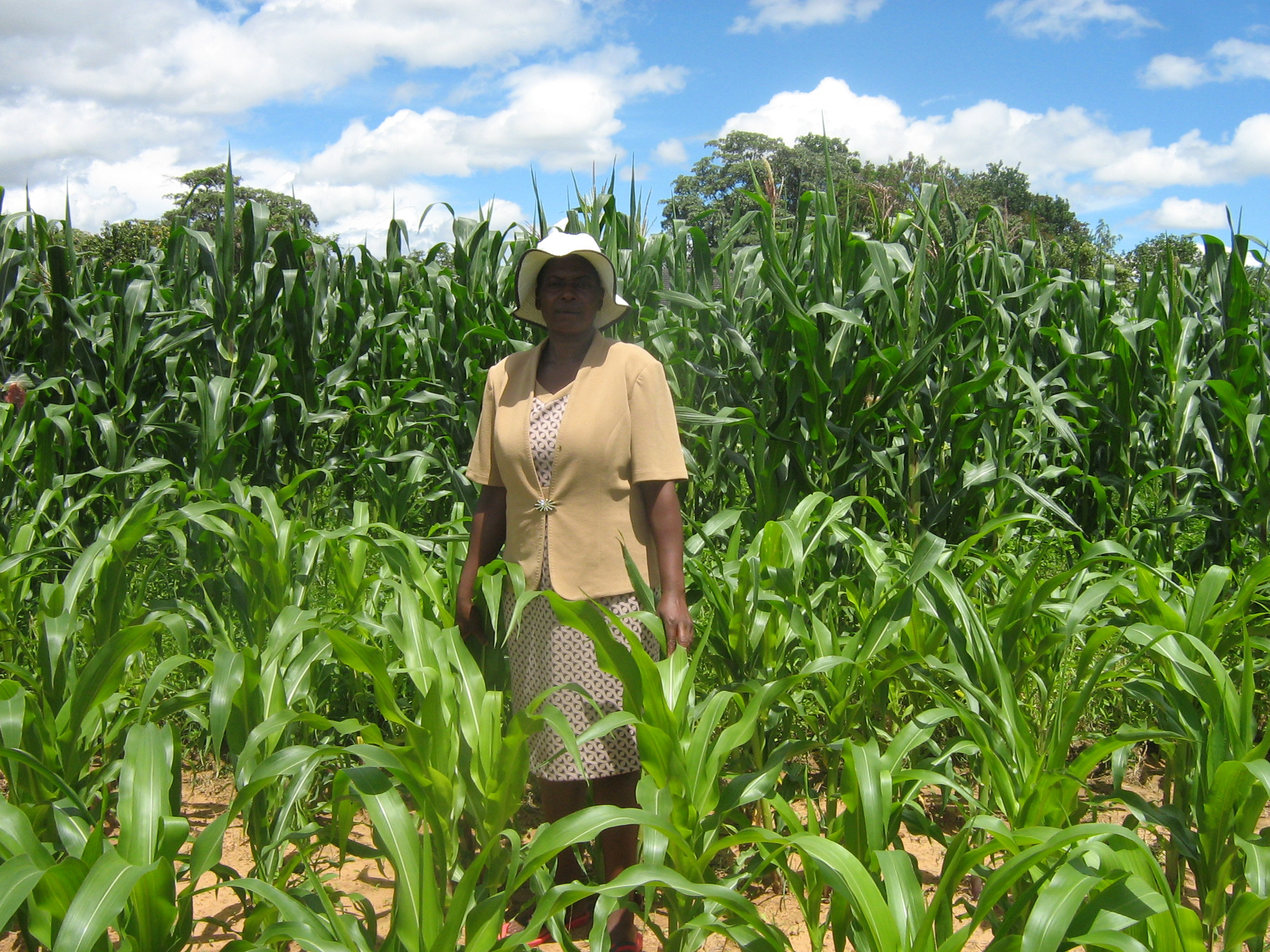 Farmer Chengetai Zonke, 52, in her maize field in Chiware, in Zimbabwe's northeastern Manicaland Province
