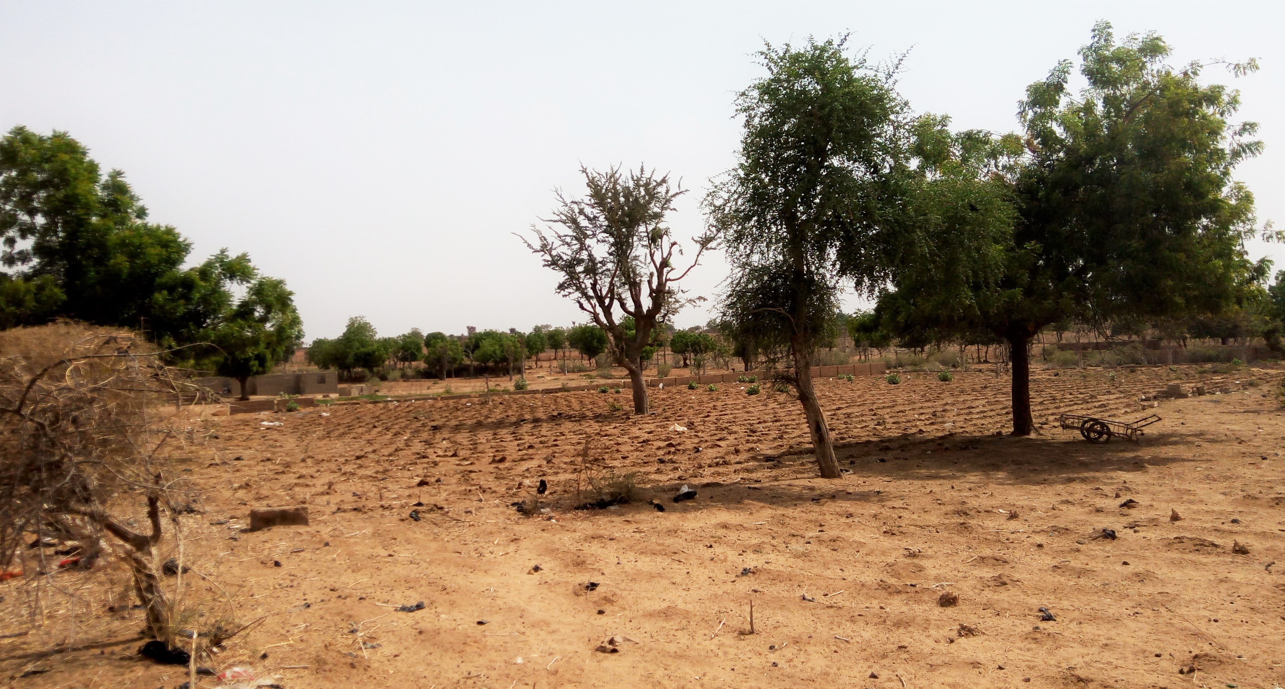 how does deforestation lead to desertification