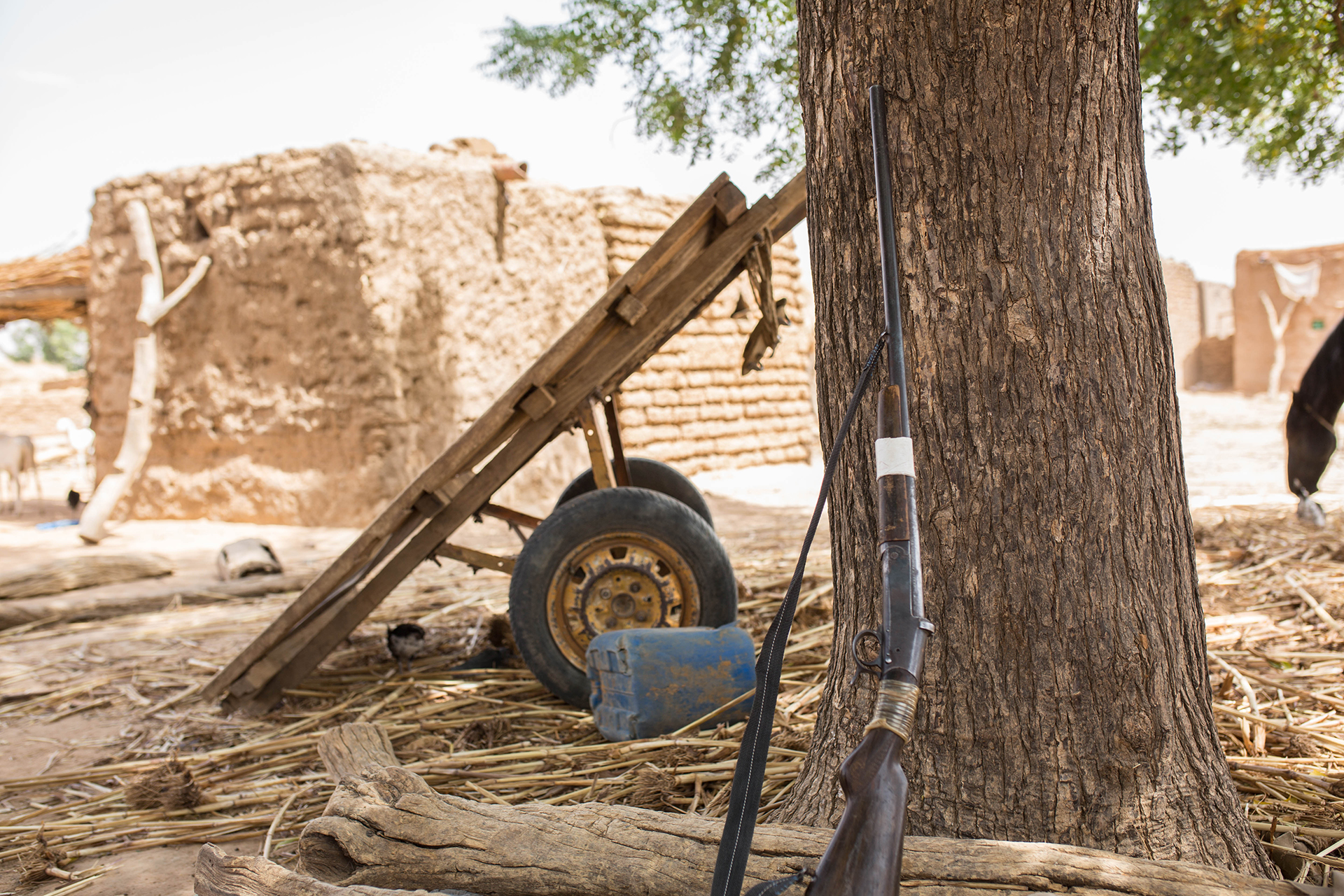 An old rifle leans against a tree