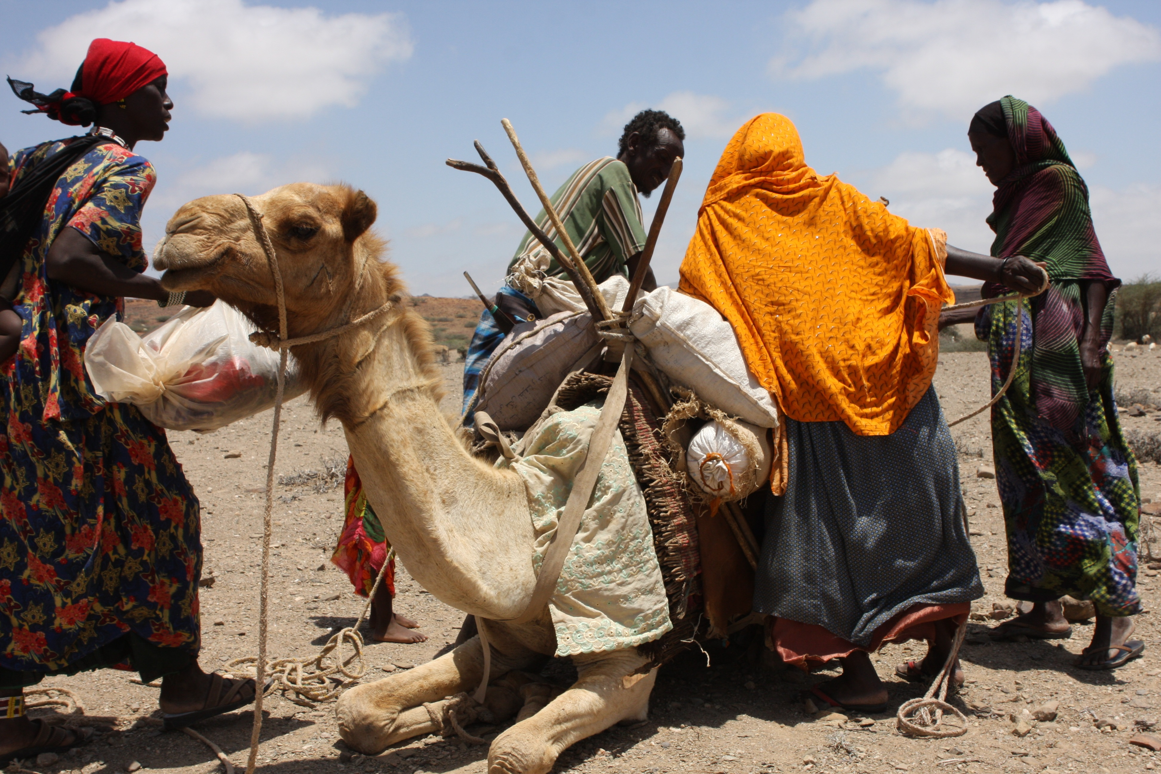 Pastoralists load their camel