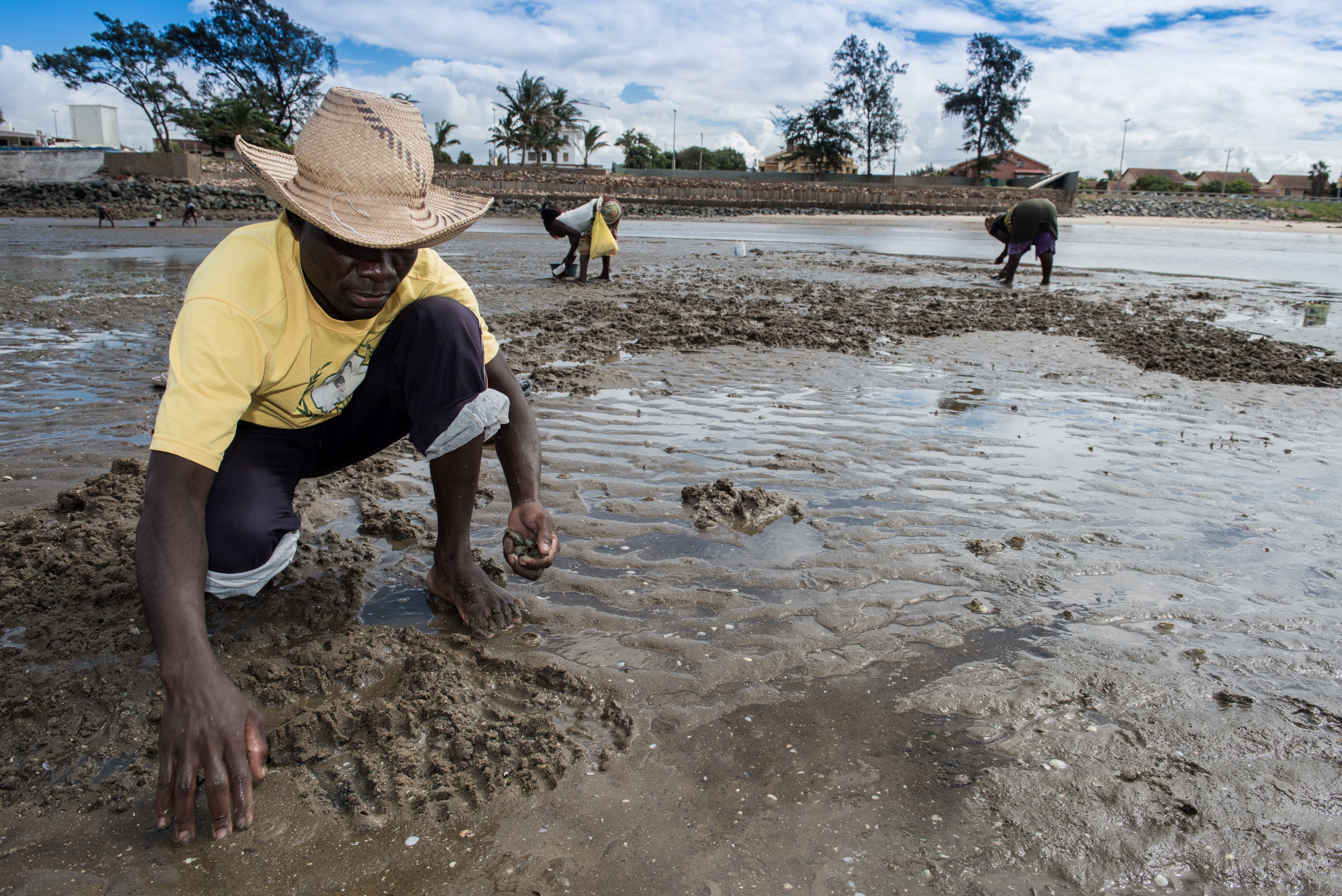 Clam pickers at low tide in the Mozambique capital of Maputo