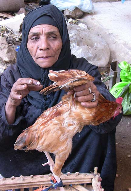 Many Egyptians keep and raise domestic poultry, making it difficult to eradicate bird flu completely, the government says.