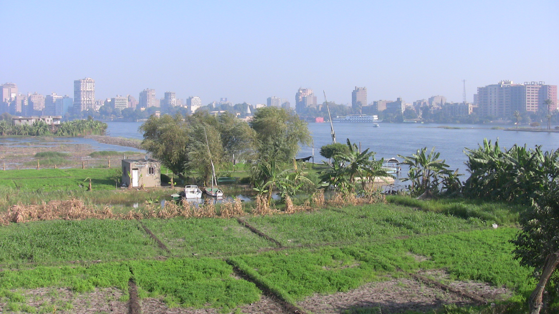 Situated 20 minutes south of downtown Cairo, the Nile island of al-Qursaia looks like a green paradise of sugar cane plantations and profuse clover fields.