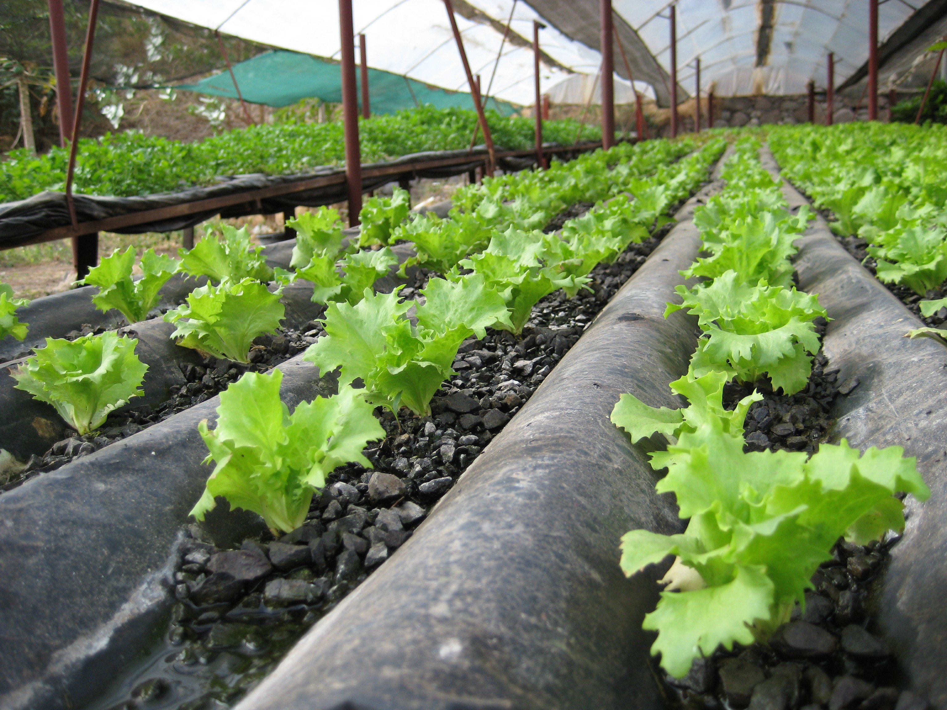 An analysis of hydroponics which is growing without soil