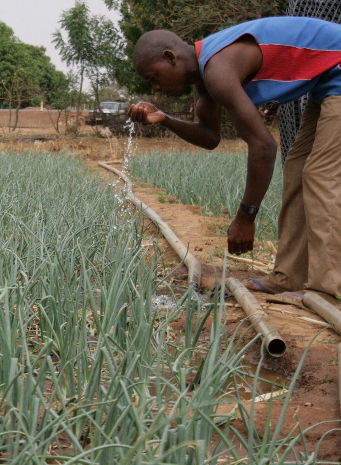 irin promouvoir l irrigation des potagers au goutte goutte. Black Bedroom Furniture Sets. Home Design Ideas