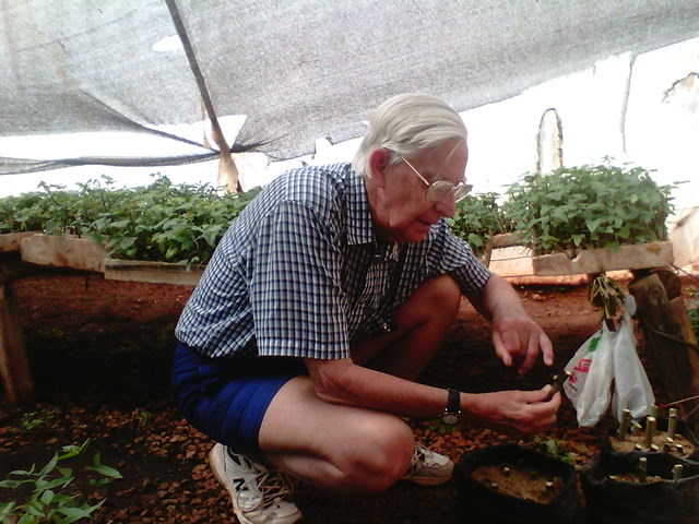 Dr Ian Robertson holds a sample of a tissue cultured cassava