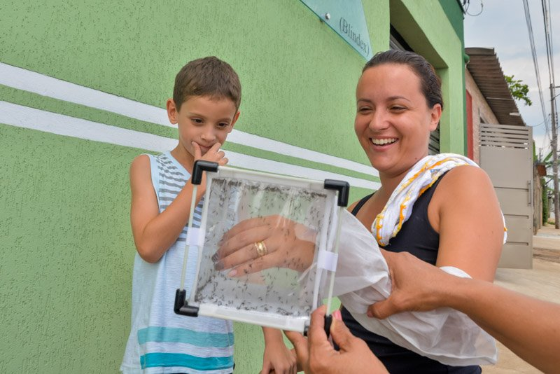 In the Brazilian city of Piracicaba, local people are learning about genetically modified mosquitos that are being used to reduce populations of the mosquito that transmits Zika virus and dengue.