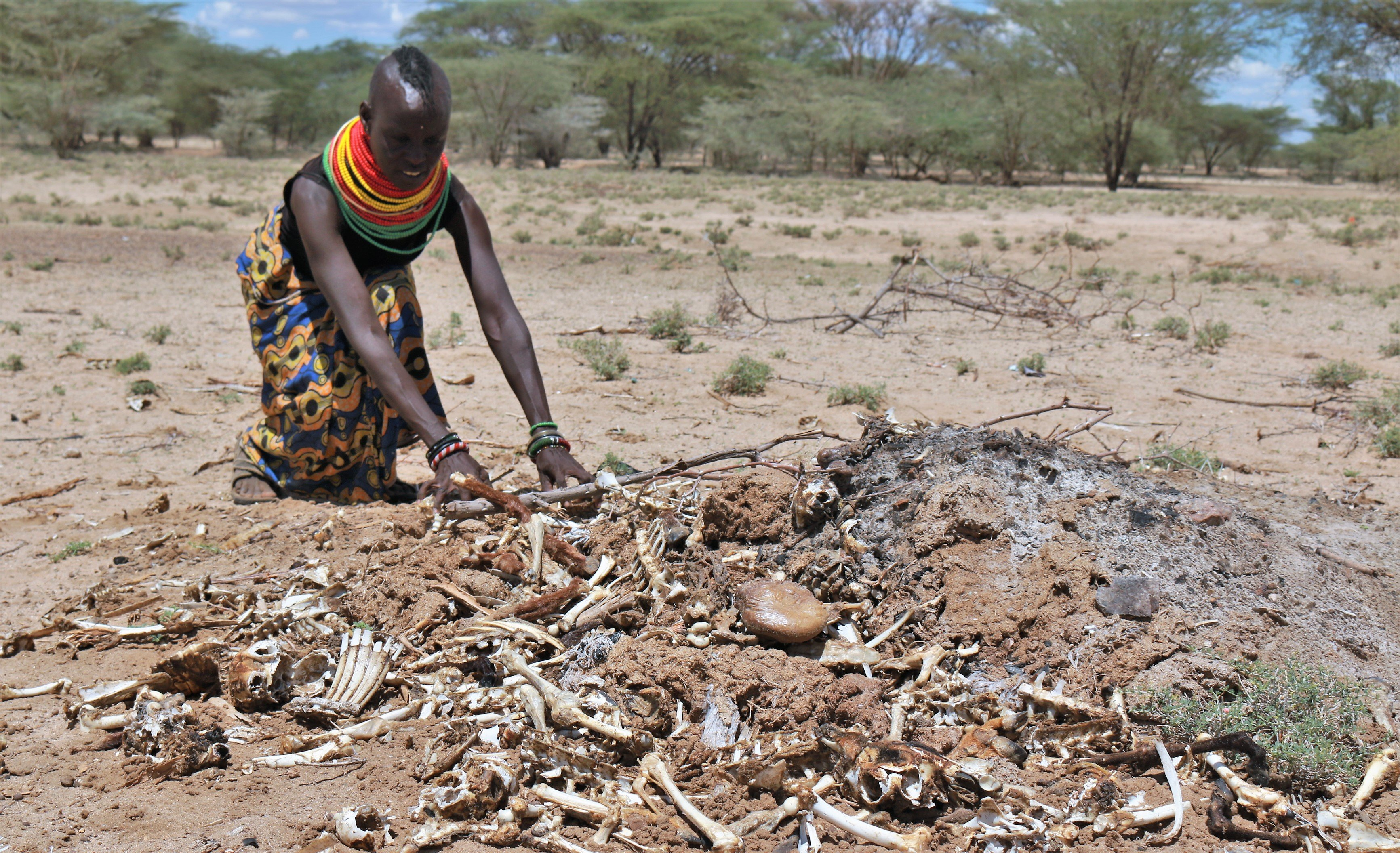 Turkana women with goat carcases