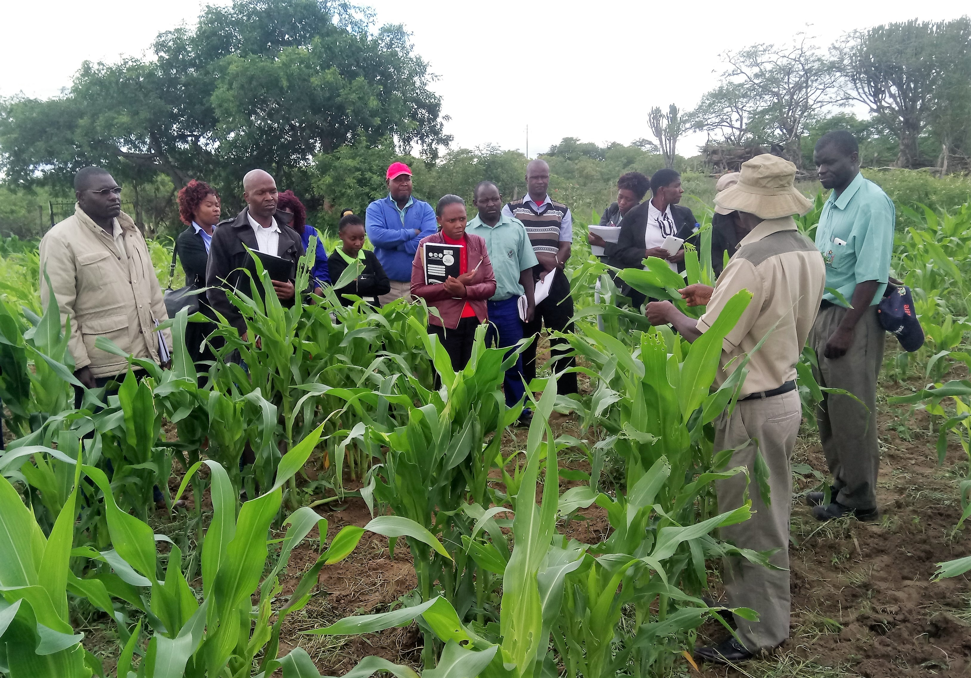 Zimbabwean plant scientists teach agricultural extension workers about the fall armyworm