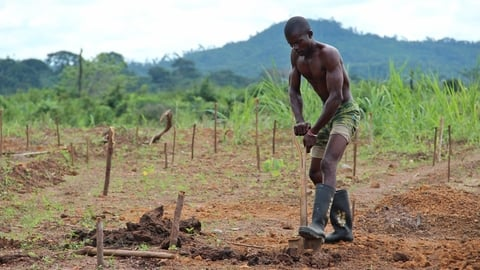 A man digs a fresh grave at the graveyard behind the IFRC Ebola treatment centre 10 miles from Kenema. (Oct 2014)