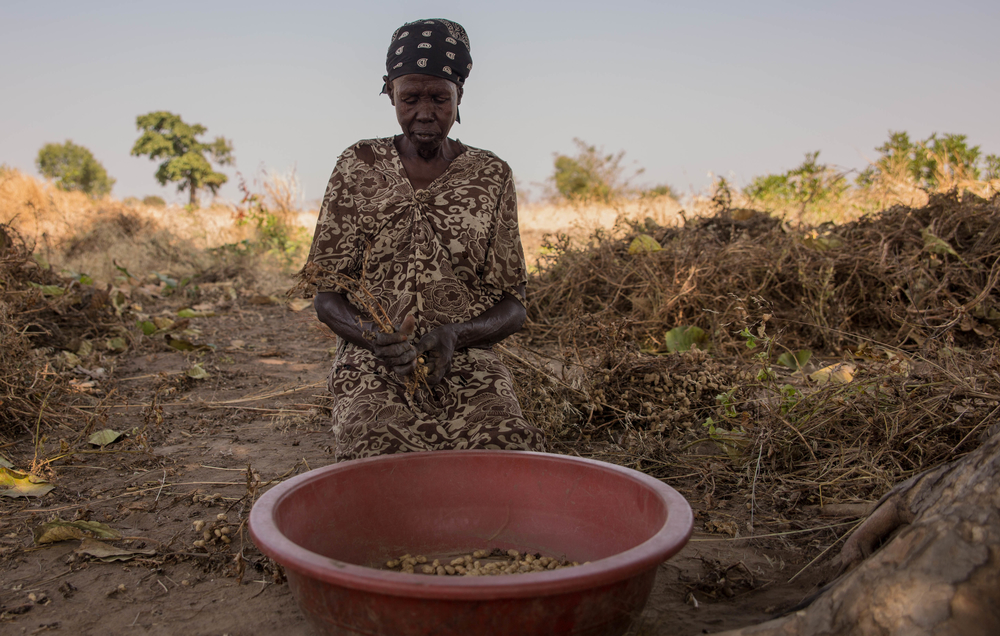 Abuk Moukiir sits in the shade of a tree while harvesting peanuts