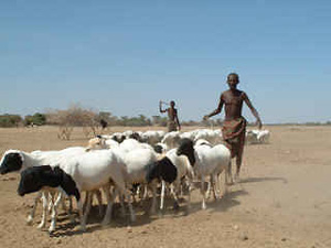 [Ethiopia] Pastoralists and livestock in Somali Region.