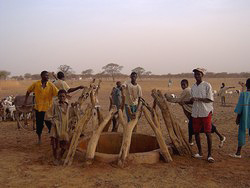 [Mali] Village well infected by Guinea worm in Mali.