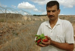 [Occupied Palestinian Territory] West Bank, Israel. A Palestinian vegetable grower displays some of his produce he can no longer sell as the barrier separates him from his former market. [Date picture taken: 09/24/2005]