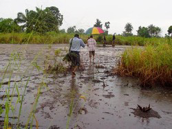 [Nigeria] Environmental damage from an oil spill in Kegbara-Dere in the Ogoni district of the Niger Delta. Residents say the spill is more than 10 years old. [Date picture taken: 07/23/2006]