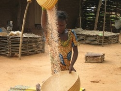 [Niger] Child sieves millet in south western Niger village at height of hungry season. [Date picture taken: 08/23/2006]