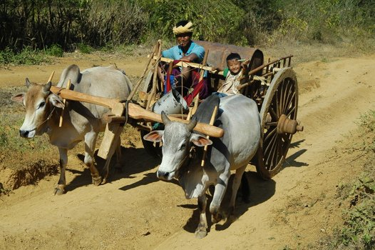 A farmer and his son in their ox cart in poverty-stricken Myanmar.