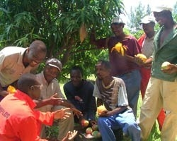 [Hoedspruit, South Africa] Workshop participants have formed committees to promote HIV prevention on farms.