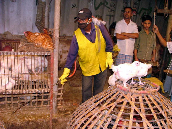 Health workers spray a poultry farm in Chittagong, Bangladesh's second largest city. The country has witnessed a further spread of bird flu over recent weeks.
