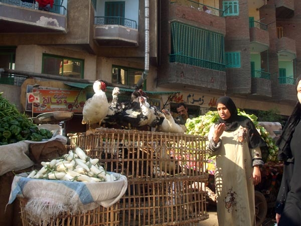 Live poultry on sale on the streets of Cairo.