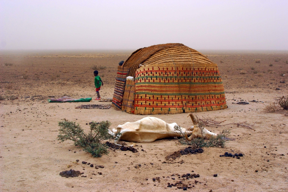 A high rate of livestock deaths is reported from Ethiopia's Ogaden region due to drought and other factors.