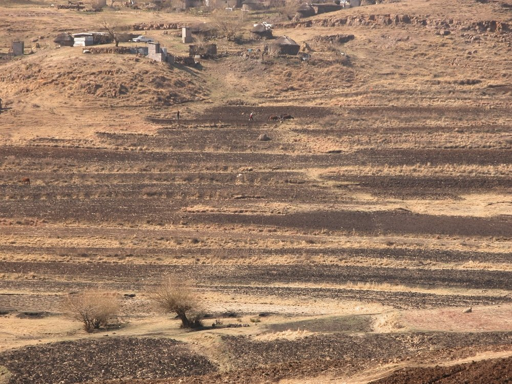 Parched fields in Lesotho await rain.