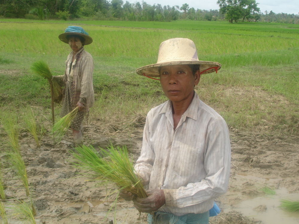 Thousands of small time paddy farmers like this one outside Labutta in cyclone-affected southern Myanmar lost everything to Nargis.