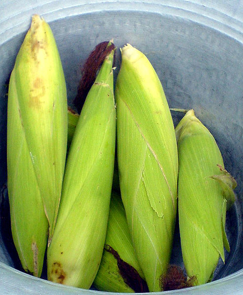 Green Maize - for generic use