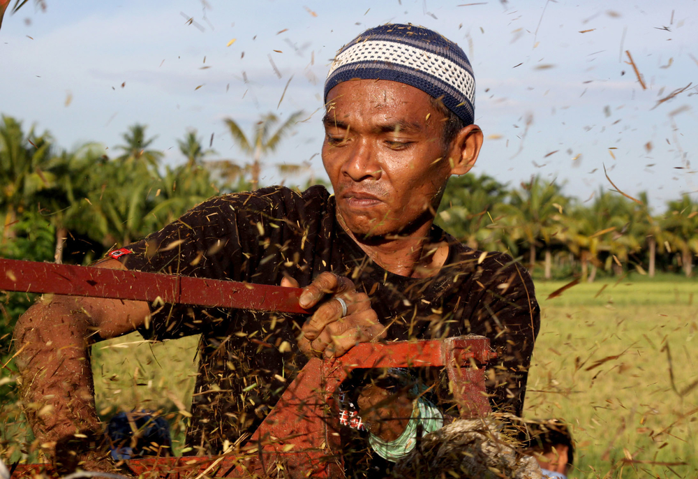 Datu Saudi Ampatuan, Mindanao, Philippines - A farmer returns to his rice field he had abandoned two years earlier at the height of conflict between Muslim separatist rebels and Philippine forces