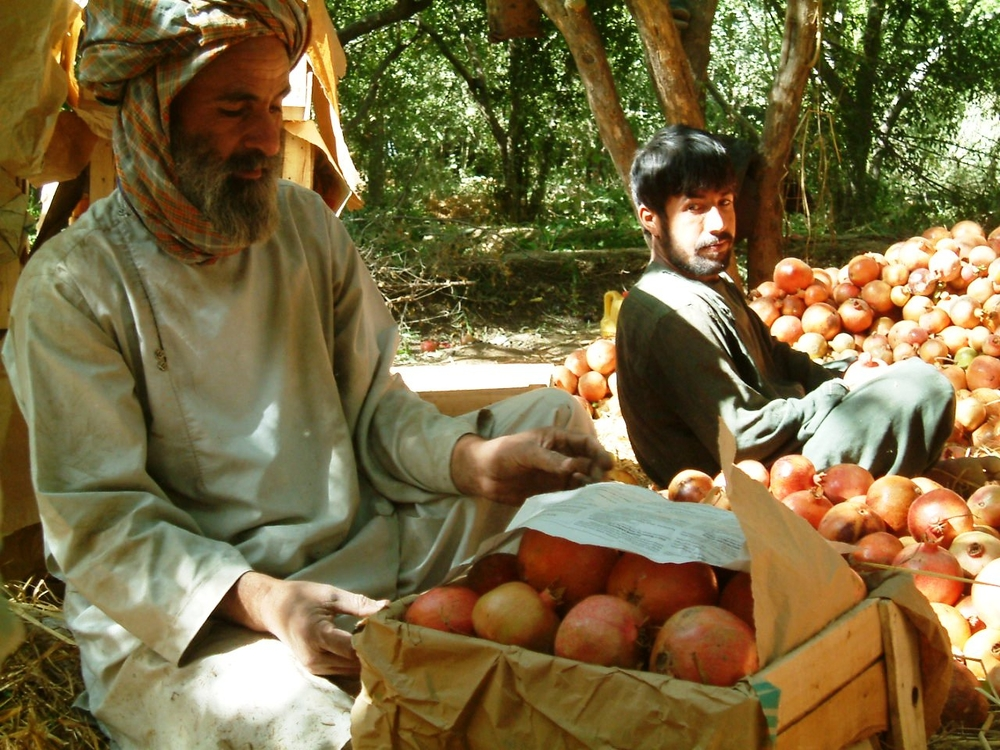 Some farmers say they cannot work in their pomegranate farms due to insecurity