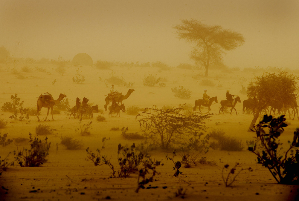 A caravan of camels walks through the desert in the middle of a dust storm near Mao, Western Chad