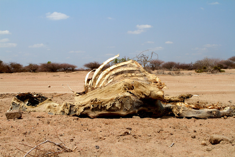 The carcass of a camel that has succumbed to drought lies on a roadside in northern Kenya