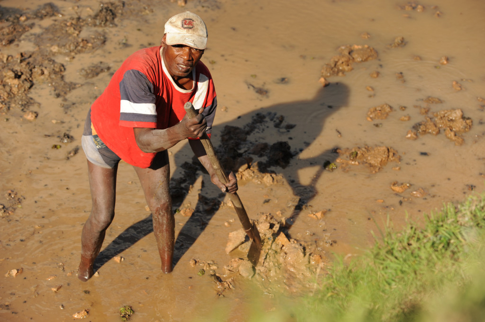 A farmer in the capital of Madagascar, Antananarivo, prepares his field before the planting of rice