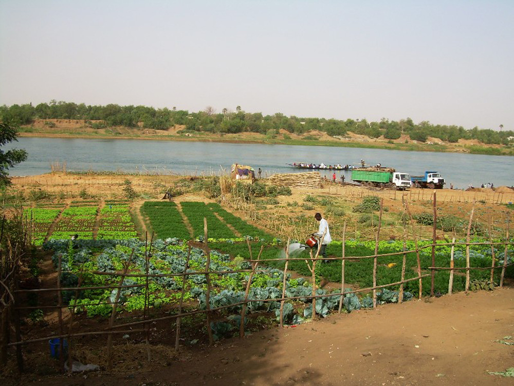 Residents of Kayes in western Mali increasingly rely on market gardening next to the Senegal River, as rain-fed cereal crops routinely fail
