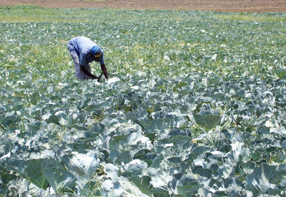 Irrigation has boosted farmers' yields