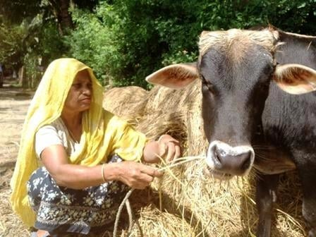Subsistence farmer Nur Banu, 70, a resident of Chittagong District, says she would never leave her cow behind if there was a cyclone. Residents in Bangladesh coastal communities would like to see the construction of shelters that could provide some kind o